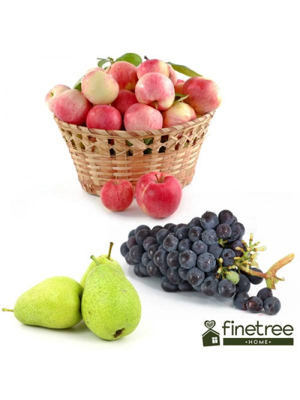 Finetree UK Fruit Crusher - Apple Wine Cider Juice Press - 7L